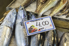 Fresh fish in the fish market - Greece Stock Image