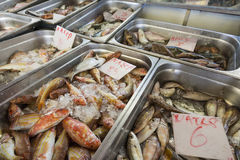 Fresh fish in the fish market - Greece Stock Images