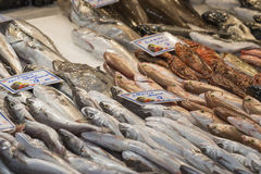 Fresh fish in the fish market - Greece Royalty Free Stock Photography