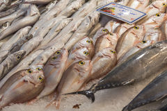 Fresh fish in the fish market - Greece Royalty Free Stock Image