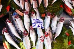 Fresh fish at fish market in Istanbul Royalty Free Stock Photo