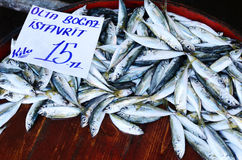Fresh fish at fish market in Istanbul Royalty Free Stock Images