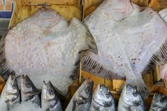 Fresh fish in the fish market. A limbless cold-blooded vertebrate animal with gills and fins and living wholly in water Royalty Free Stock Photos