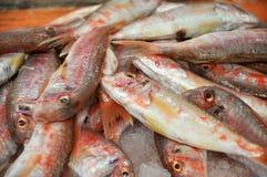 Fresh fish in a fish market Stock Photos