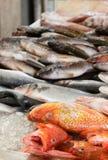 Fresh fish in a fish market Royalty Free Stock Photo