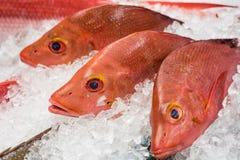 Fresh fish at a fish market Stock Photos