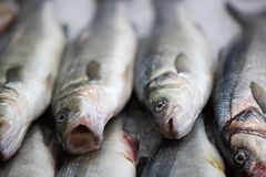 Fresh fish on fishmarket Royalty Free Stock Image