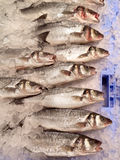 Fresh Fish - Food Market Stock Image