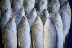 Fresh fish in fresh market Royalty Free Stock Image
