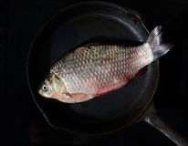 Fresh fish in a frying pan on a black background. Fresh fish in a frying pan Stock Images