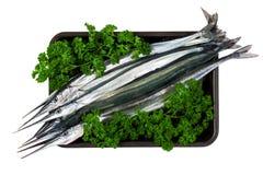 Fresh fish garfish (Belone belone) in leaves of parsley Stock Photos