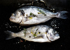 Fresh fish gilt-head bream dorade with salt and pepper. Fresh fish gilt-head bream dorade with salt, herbs and pepper Royalty Free Stock Photography