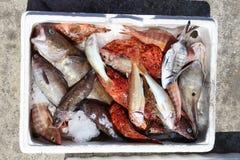 Fresh fish in Greece Stock Photos