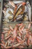 Fresh fish on Greek island Kalymnos local market Royalty Free Stock Photos