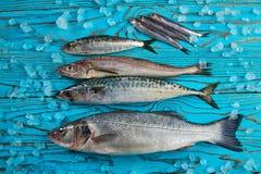 Fresh Fish Hake Seabass Sardine Mackerel Anchovies Royalty Free Stock Images