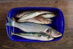 Fresh fish hake seabass sardine mackerel anchovies Stock Photo