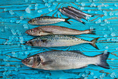 Fresh fish hake seabass sardine mackerel anchovies Royalty Free Stock Images