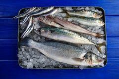Fresh fish hake seabass sardine mackerel anchovies Stock Image