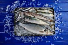 Fresh fish hake seabass sardine mackerel anchovies Royalty Free Stock Photos