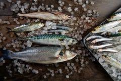 Fresh fish hake seabass sardine mackerel anchovies Stock Photos