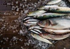 Fresh fish hake seabass sardine mackerel anchovies Royalty Free Stock Photo