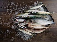 Fresh fish hake seabass sardine mackerel anchovies Royalty Free Stock Photography