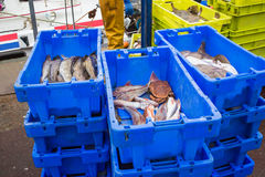 Fresh fish in a harbour Royalty Free Stock Images