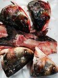 Fresh fish heads on white royalty free stock photo