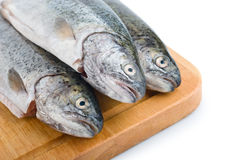 Fresh fish heads in a row on wooden board. On white background Stock Images