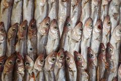 Fresh Fish Heap on Market Stall Resdy For Sale. In Market Stock Photos