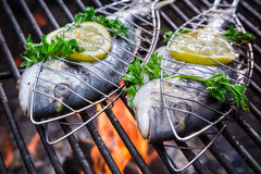 Fresh fish with herbs and lemon on grill Royalty Free Stock Images