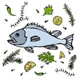 Fresh Fish With Herbs Spices and Lemon. Vector Seafood Realistic Illustration Stock Photography