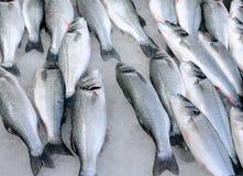 Fresh Fish On Ice. On the market Stock Photography