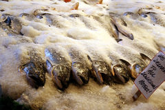 Fresh Fish on Ice. At a fish market with sign Royalty Free Stock Photo