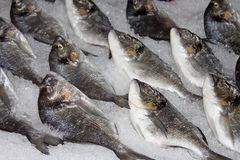 Fresh fish on ice Royalty Free Stock Photos