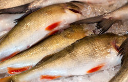 Fresh fish on ice. Royalty Free Stock Photo