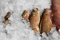 Fresh fish on ice Stock Photos