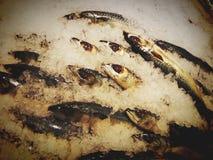 Fresh fish on ice Stock Image