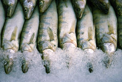 Fresh fish in the ice Stock Photo