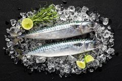 Fresh fish on ice on a black stone table Stock Photography
