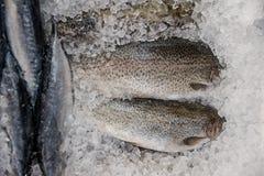 Fresh fish into ice Royalty Free Stock Photos
