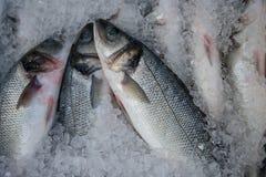 Fresh fish into ice Stock Image