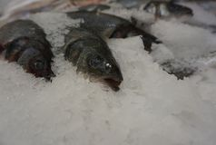 Fresh fish in ice crumb. Fresh fish salmon lies in the ice crumb on the window stock images