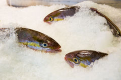 Fresh fish on ice. Decorated Royalty Free Stock Photos