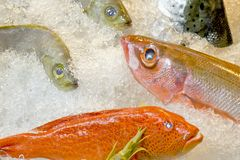 Fresh fish on ice decorated for sale at market Stock Photo
