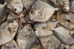 Fresh fish on ice decorated Stock Images