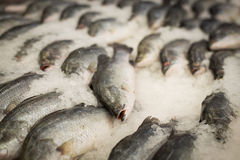 Fresh fish on ice decorated for sale at market Royalty Free Stock Photos