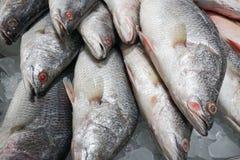 Fresh fish on ice at farmers market. Fresh fish on ice at market, Samui island, Thailand Royalty Free Stock Photos