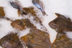 Fresh fish on ice in fish market. Fresh fish on ice decorated for sale at market stock images