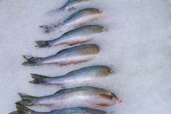 Fresh fish on ice in fish market Stock Images